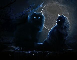 freetoedit remixit night cats picsart