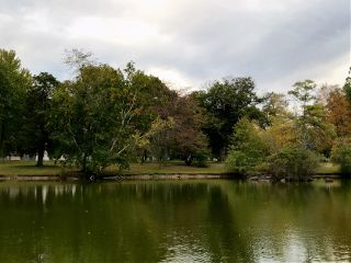 freetoedit nature trees fall