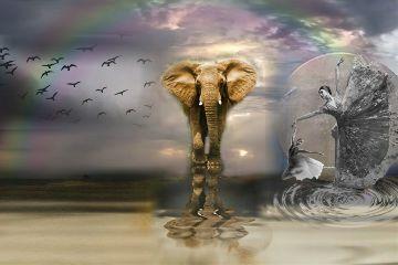 emotions elephant dancer music birds freetoedit