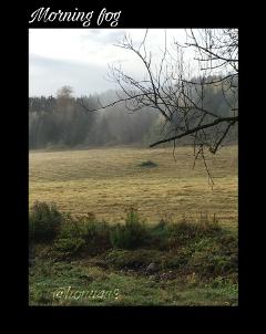 interesting nature fog field myday