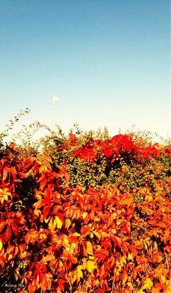 freetoedit myphotography photography nature artphotography