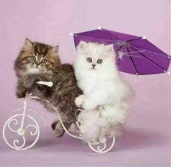 freetoedit cat cats cute beautiful