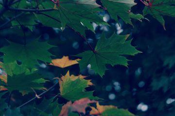 nature leaves lightcross naturalbokeh autumnvibes