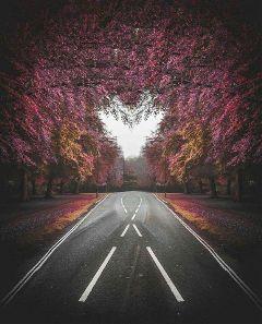 street tree heart  .  . heart