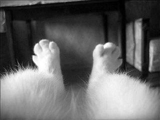 freetoedit blackandwhite feet pets