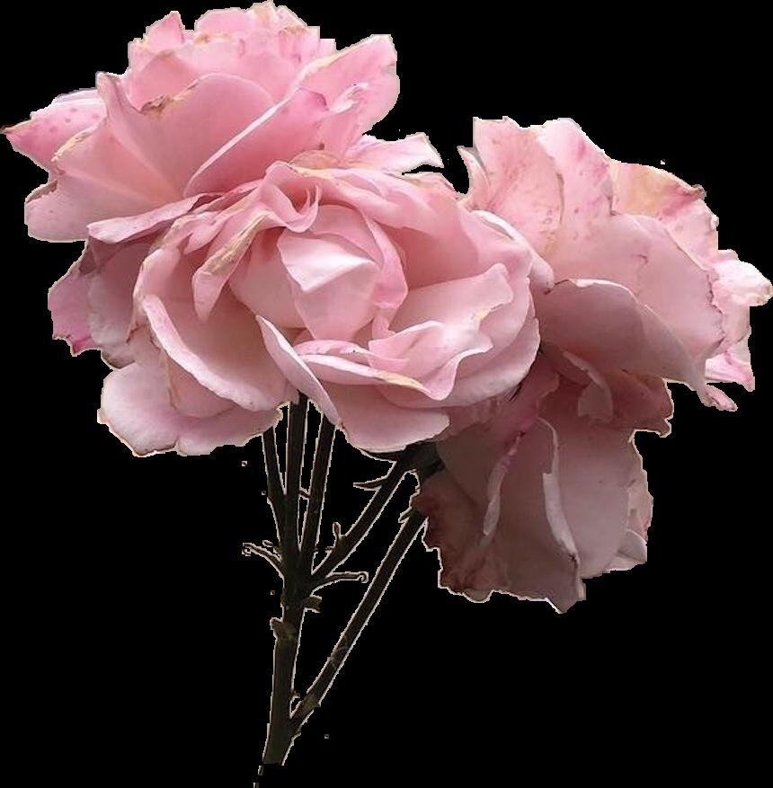 Vintage pink rose flower tumblr pinkflower pinkrose vintage pink rose flower tumblr pinkflower pinkrose mightylinksfo