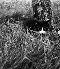 freetoedit cats cat