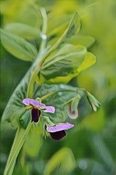 photography nature macro flowers wildflowers