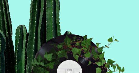 vinylremix freetoedit plants cactus