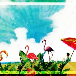 flamingoparty beachside sunnysideup colorsplash