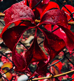 freetoedit colorful flower rain water