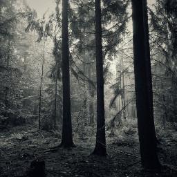 woods fog autumn emotions paradiselost