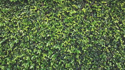 background green leaves wall freetoedit