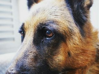 dog love petsandanimals popart cute freetoedit
