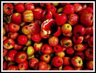 z3po apple freetoedit