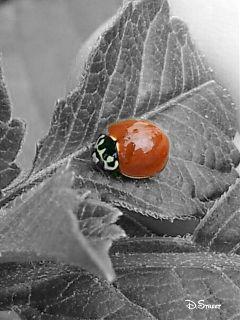 photography nature insect bugs ladybug