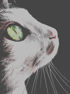 freetoedit cat picsart eye green