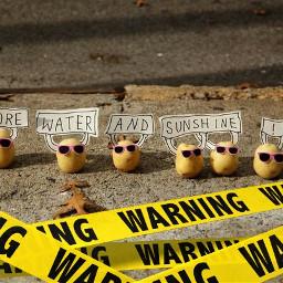 freetoedit yellowstickers potatoes meeting