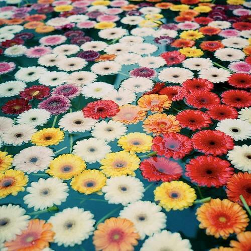 #Beautiful#flowers