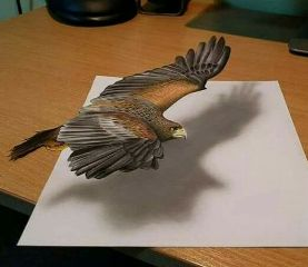 bird eagle art