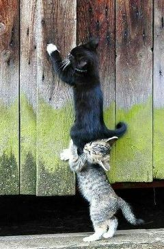 cat funny cats