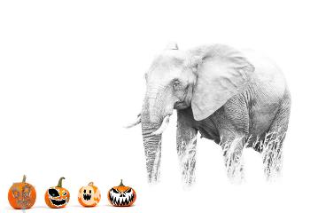 freetoedit dailyremix myedit pumpkins spooky