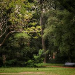 freetoedit garden nature trees ilumination