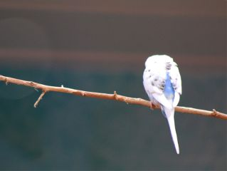 freetoedit bird branch lonely beautiful