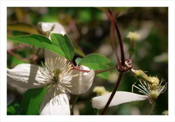 landscape macro nature flower blossom