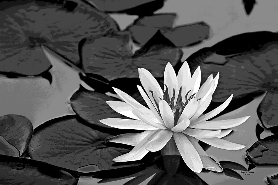 #Lotus#black#and#white