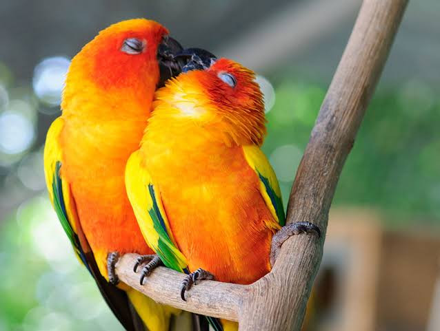 what a cute couple
