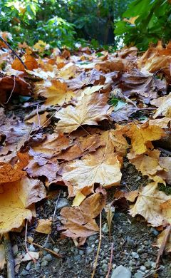 walk park path leaves coloredleaves