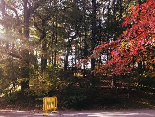 freetoedit autumnvibes sunlight