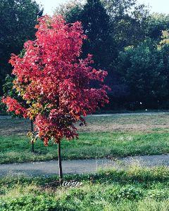 freetoedit autumn love