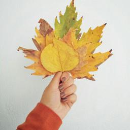 autumn autumnlove autumncolors