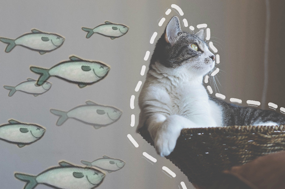 #freetoedit I LOVE these fish stickers! I just had to try them! They are so cute! #cat #fish #catfish #lol #lines #drawing #cute #minimal #art #interesting #nature #surreal #sticker #photography #myedit #meme