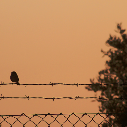 sparrow onthebarbedwire wirenetting endoftheday sunsettime