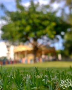 park parque malaga torremolinos fotografia