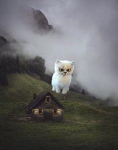 catsphotography freetoedit foggyremix