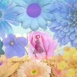 flowers field happiness freetoedit