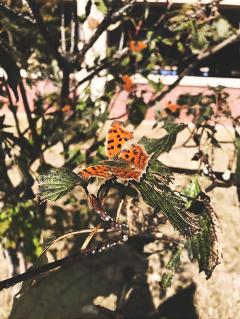 maneatingbutterflies freetoedit