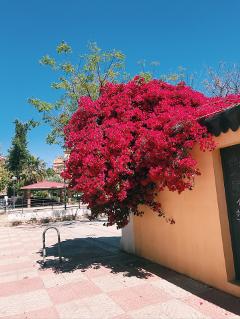 freetoedit flowers tree colors interesting
