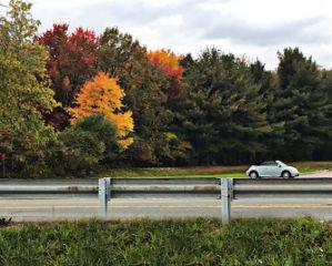 freetoedit autumnvibes trees fallcolors car