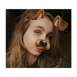 dogfilter