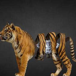 icyx tiger spiral diamond bright