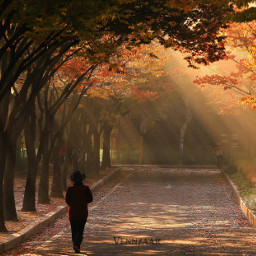 morning ligth southkorea autumn human