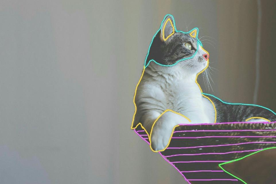 #cat #neon #lines