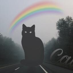 mysteriousremix freetoedit cats rainbow dark