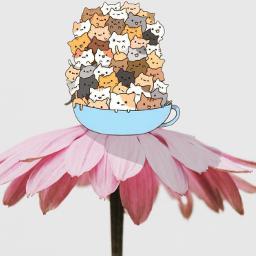 freetoedit clipart flower cute cats