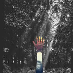 hope hand reachingout blackandwhite forest